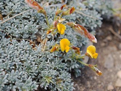 flora de la estepa