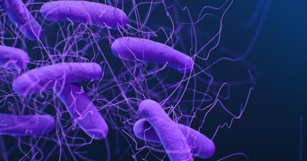Washington State University researchers have developed an easy-to-use software program to identify drug-resistant genes in bacteria.  The program coul