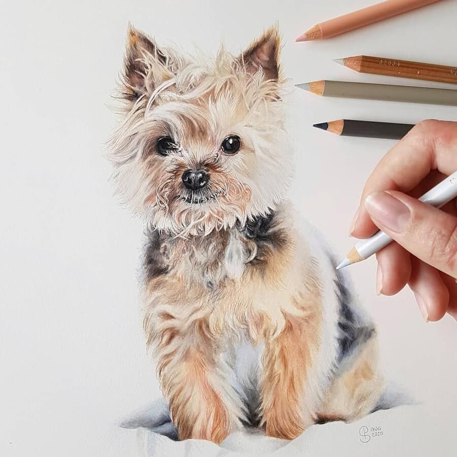 06-Yorkshire-Terrier-Yorkie-Paula-www-designstack-co