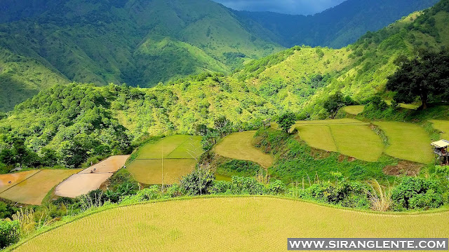 Benguet Rice Terraces