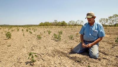 Cambio climática agricultura ganadería
