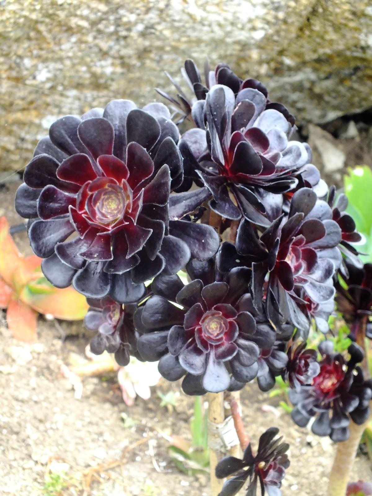 piękny kwiatek roślinka