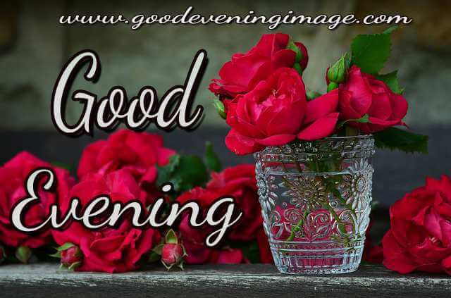 good evening rose flowers images
