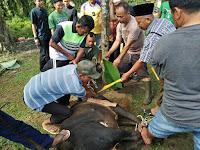 Usai Shalat, Prajurit Korem 022/PT  Laksanakan Pemotongan Hewan Kurban