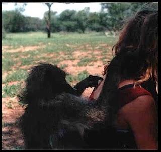baboons, baboon rehabilitation, midlands, magaliesberg