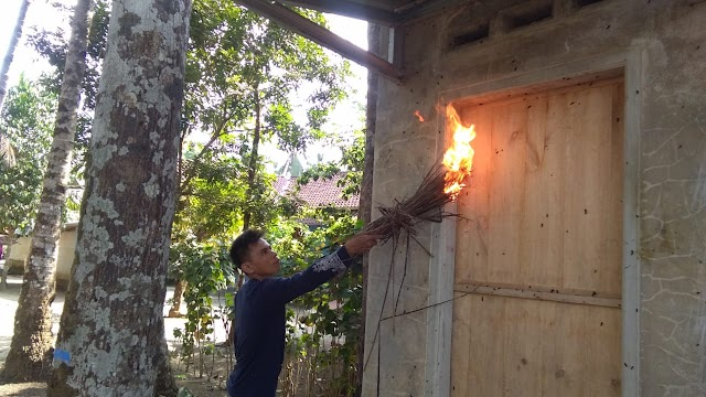 Warga Dusun Kemplung Desa Karangbenda Diserang Wabah Ulat Bulu