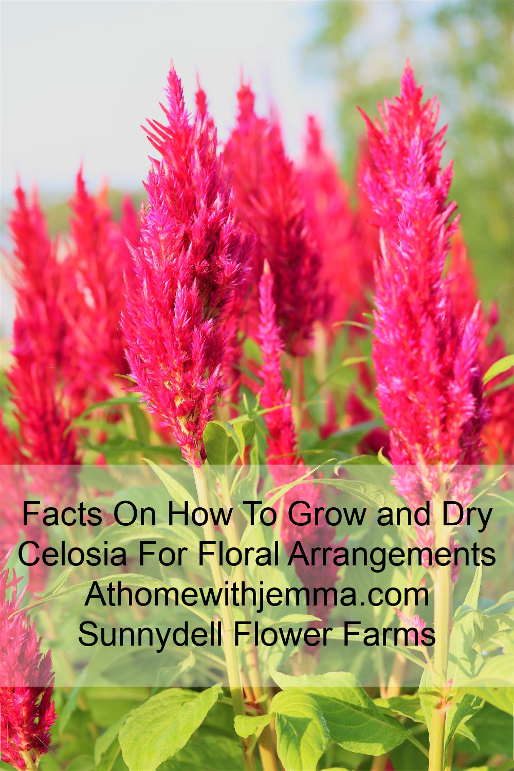 Bouquets-Drying-Gardening-Growing-Grower-Flowers-Facts-Tips-athomewithjemma