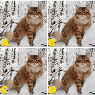 Which image is different? image 27