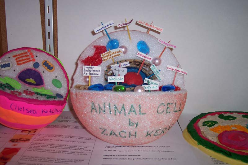 Typical Animal Cell Animal Cell Model Diagram Project Parts Structure