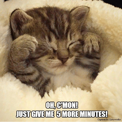 SLEEPY KITTY • ''OH, C'MON! JUST GIVE ME 5 MORE MINUTES!''