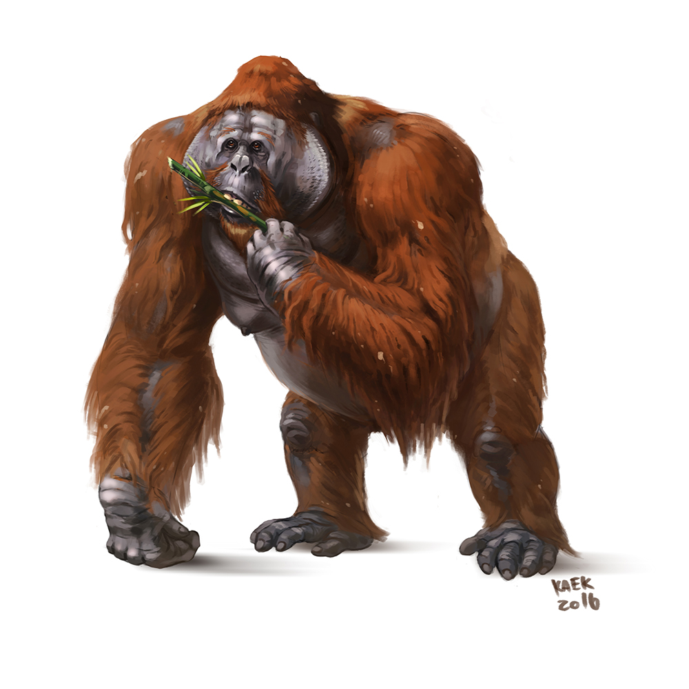 D20 Despot Dawn Of The Plane Of The Apes Gigantopithecus Dire Ape