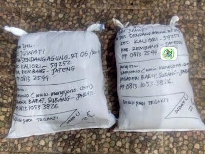 Benih padi yang dibeli   SRI JUWATI Rembang, Jateng.  (Setelah packing karung ).