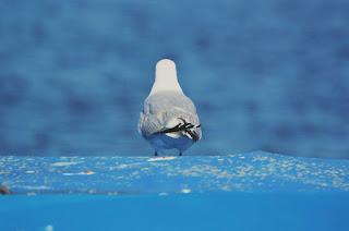 Gaviota reflexionando ante el horizonte del mar