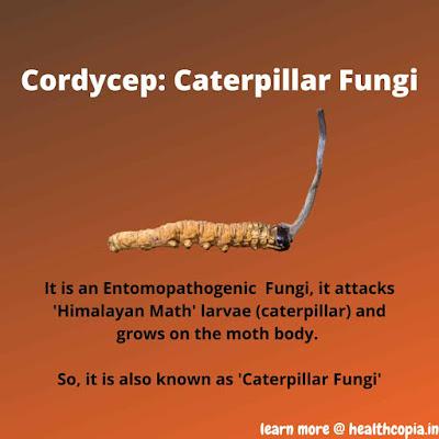 Benefits of Cordycep