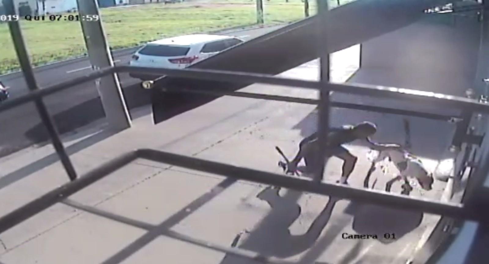 Cão morre após ser esfaqueado e espancado por policial aposentado