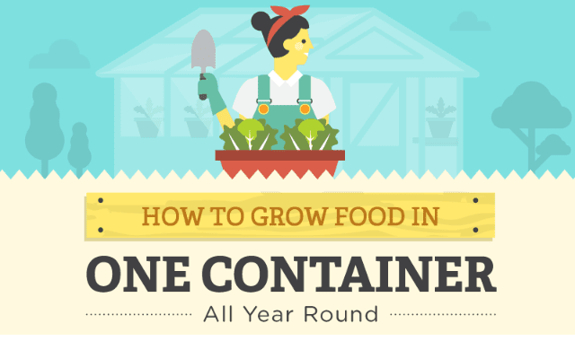 How To Grow Food In One Container All Year Round
