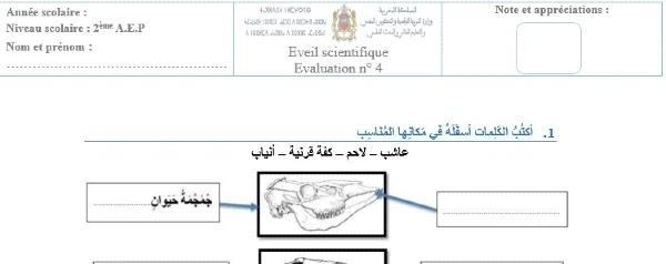 فرض النشاط العلمي المرحلة الرابعة للمستوى الثاني الدورة الثانية 2021