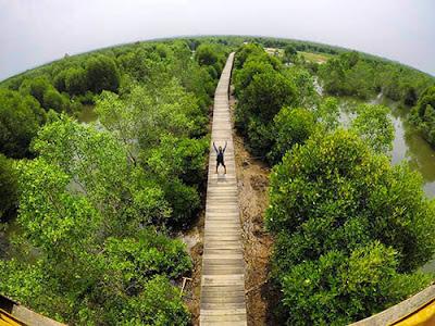 wisata mangrove lubuk kertang