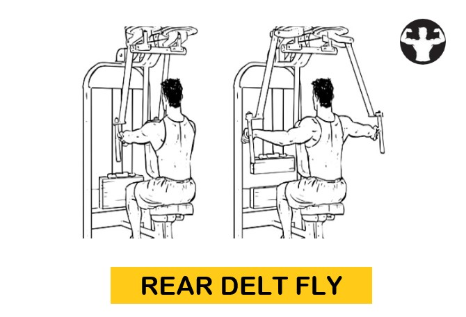 Rear Delt Fly