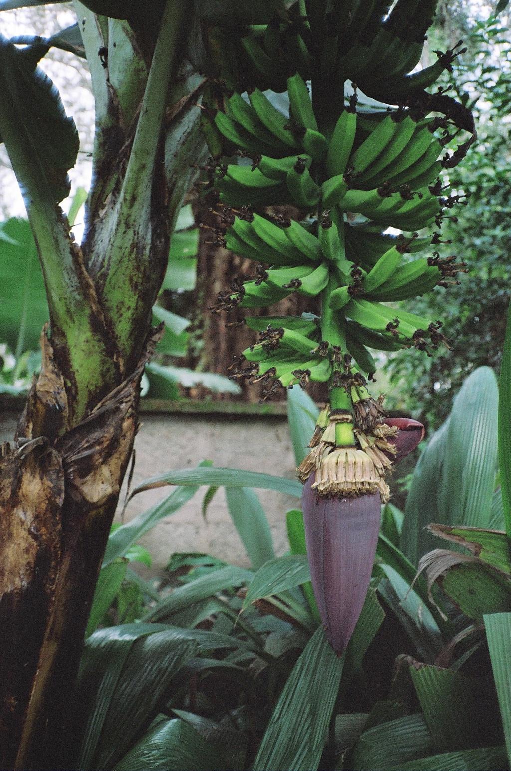 Tanzania Tanzanian Trees And Plants