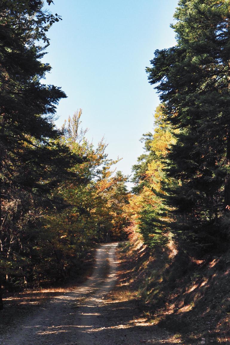 Petit sentier de forêt en automne - ardèche