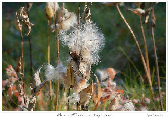 Wachusett Meadow: ... in shining outburst...