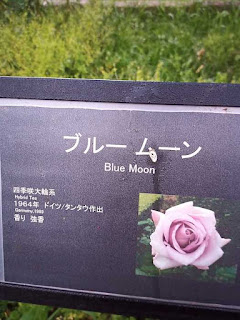 バラ(ブルー ムーン)