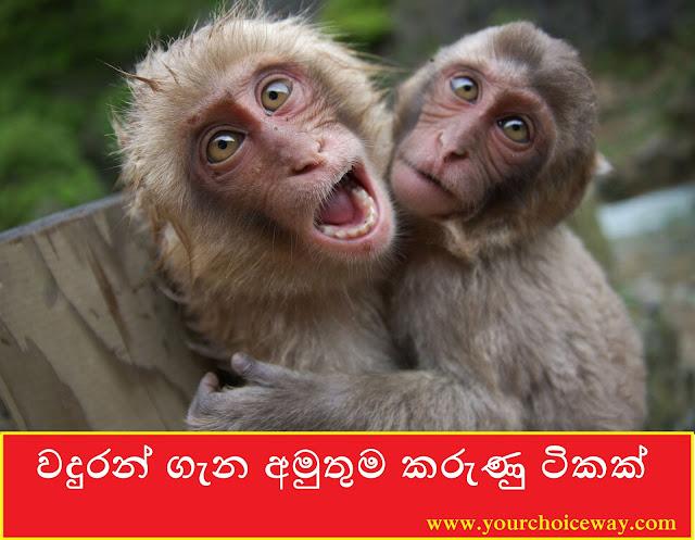 වදුරන් ගැන අමුතුම කරුණු ටිකක් 🙈🙉😍 (Some weird facts about monkeys)