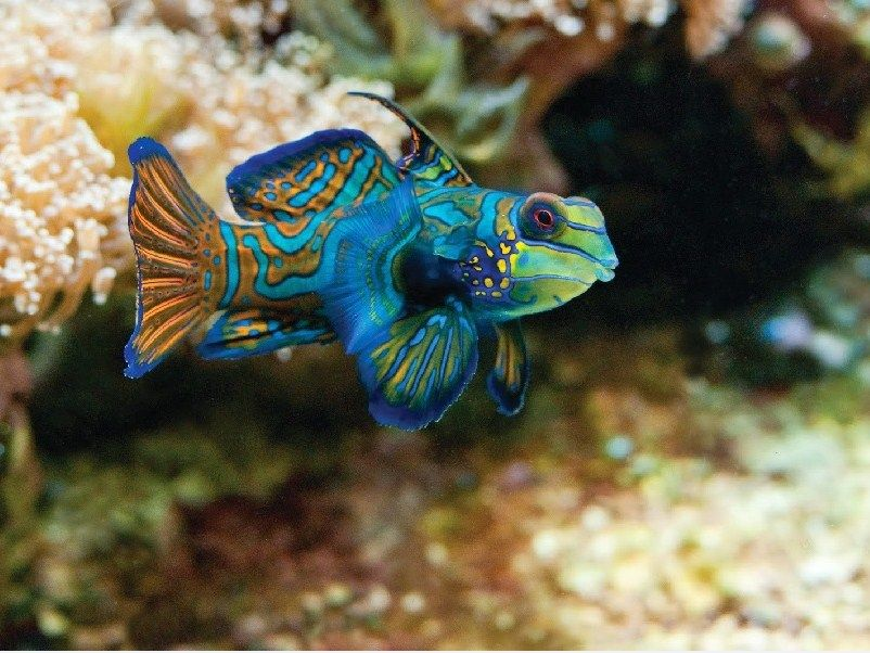 Jenis Ikan Laut Dan Gambarnya