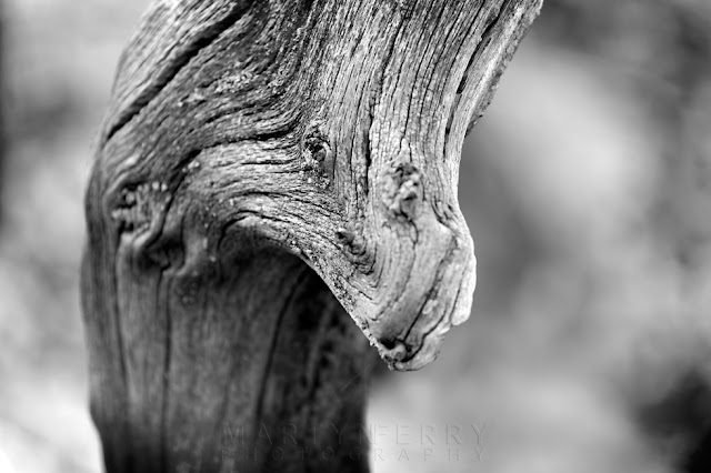 Detail shot of an animal face in a tree at Hayley Wood Nature Reserve