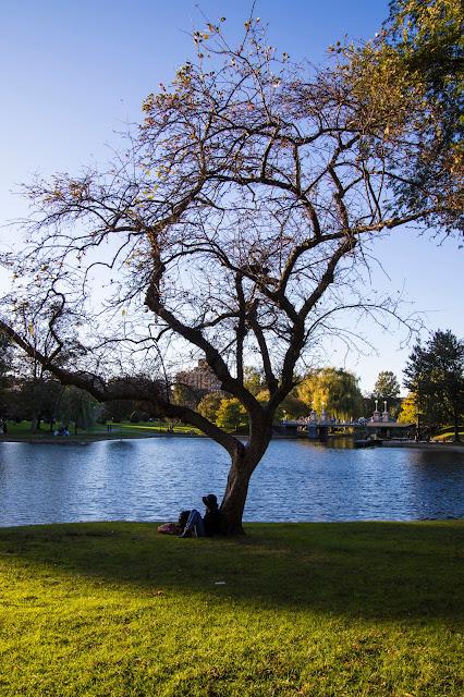 Boston public garden e Boston Common