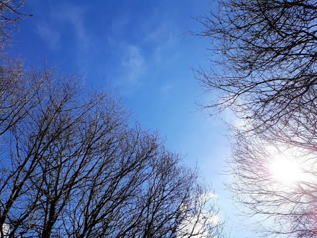 Image shows dark branches silhouetted against a bright blue Spring sky