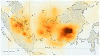 Heboh, Penemuan Ular Berkaki Jadi Korban Kebakaran Hutan di Riau