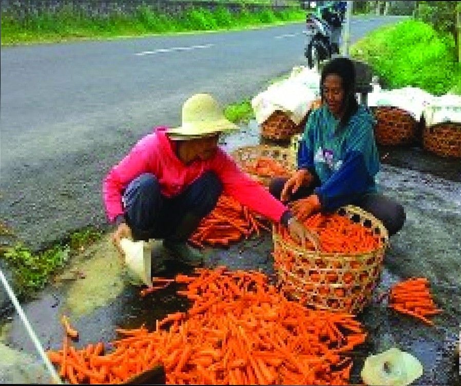 Contoh Teks Laporan Hasil Observasi Tentang Sayuran Kumpulan Contoh Laporan