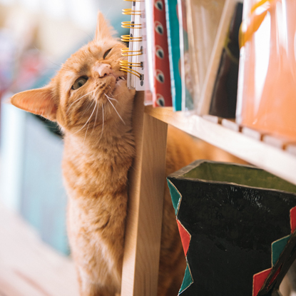a ginger cat rubbing its face on a book case