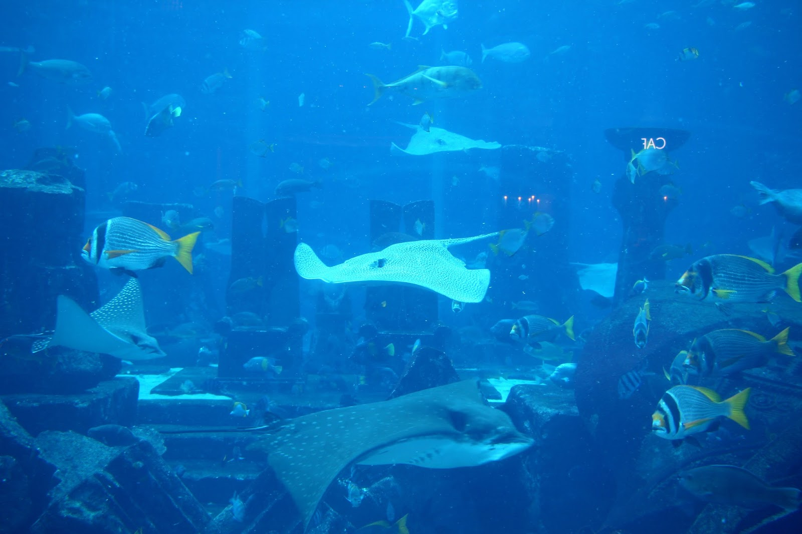 aquarium atlantis the palm