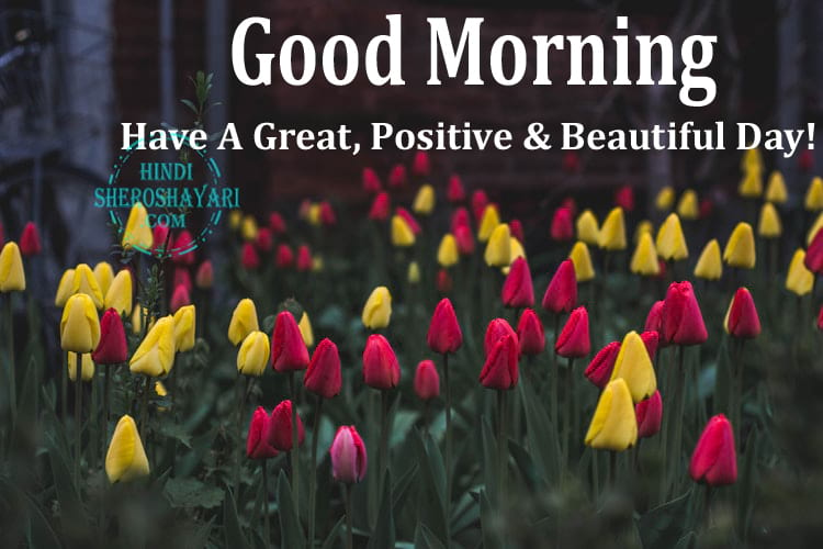 Good Morning Wishes with Tulips Flowers