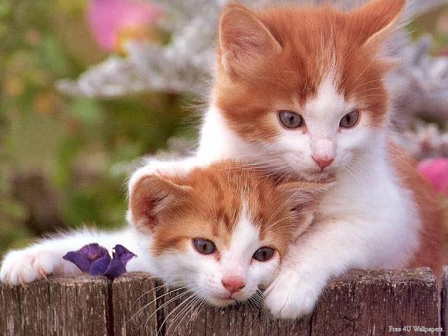 Cách chọn và nuôi mèo giỏi bắt chuột trong nhà