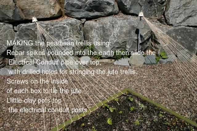 Fun design for pea trellis