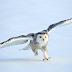 10 Jenis Burung Yang Mampu Hidup Di Wilayah Kutub