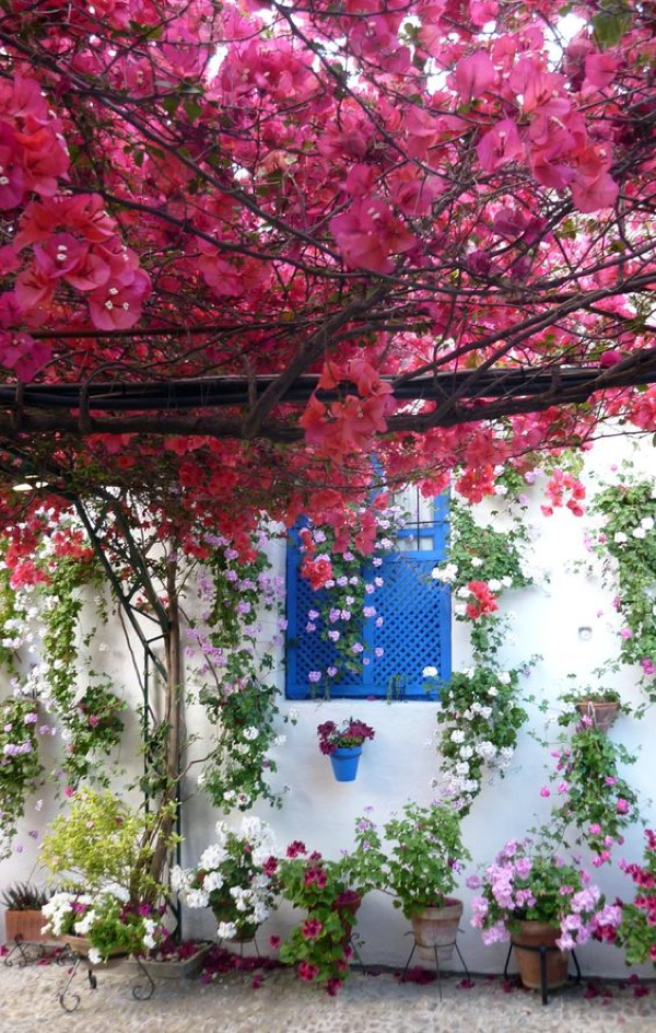 Bougainvillea provides shade in this beautiful outdoor area