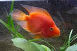 La clasificación de los distintos peces que existen