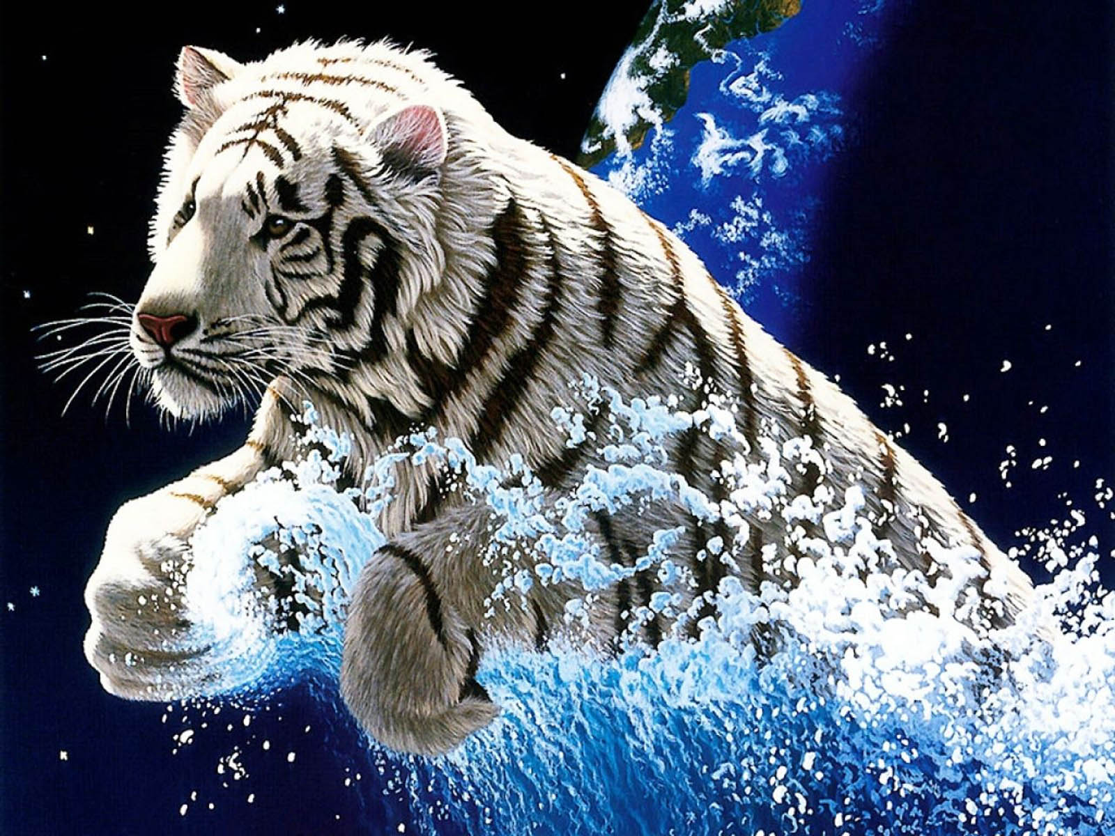 wallpaper hd white tiger - photo #41