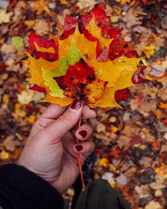 foto tumblr hoja otoño