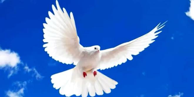 A Munição da Paz - Adoock Ezequiel