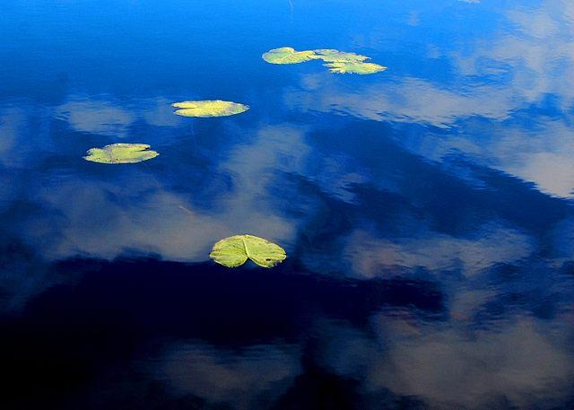 järvi, lumme, waterlily, water, water lily, blue, sky, summer, kesä, suomenkesä, pohjoinen