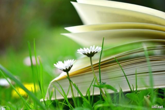 ảnh hoa cỏ và sách