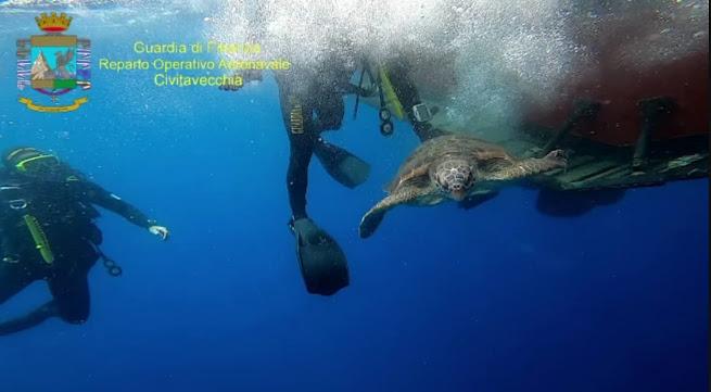 """GdF libera in mare dodici piccole tartarughe marine della specie """"Caretta Caretta"""""""