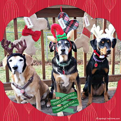 rescued dogs dressed up for Christmas
