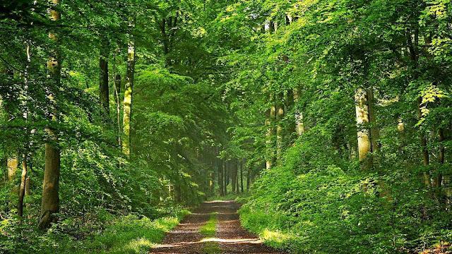 O mundo está cada vez mais verde, graças ao CO2!
